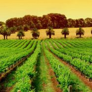 Beautiful countryside and exquisite wines